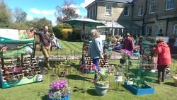 Event Cancelled Bishops Waltham Plant Fair 2020 image 1