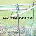 Net Cane Support Pack of 6 (75cm high)A0008