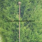 Iron Plant Stake Pack of 3 142cm high A0054