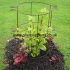 Pack of 2 Plant Girdle Tall - 41cm x 100cm 3 Ring A0091