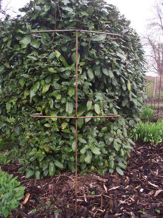 Plant Prop pack of 3 Double prop bar 54cm x 126cm A0165