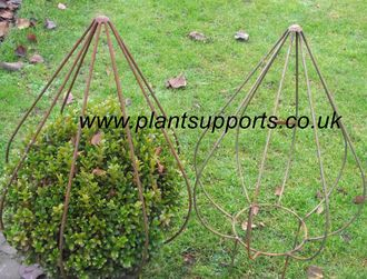 'Bud' Topiary Frame